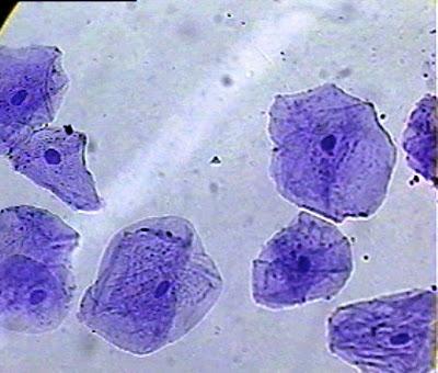 70 Gambar Sel Hewan Dan Tumbuhan Pada Mikroskop Gratis Terbaik
